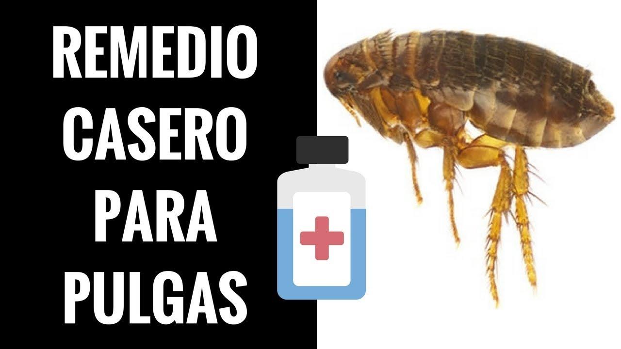 Personas pulgas remedios contra en