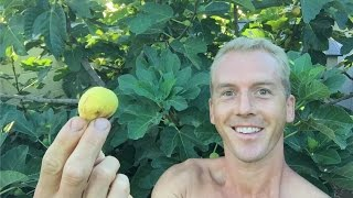 Growing a Fig Tree Forest in an Arizona Garden - My Gardening Secrets - LIVE VIDEO!