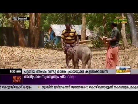 Baby elephant arrives at Muthanga Elephant Camp