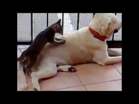 Funny animals - As a Dog with Cat - Funny Compilation