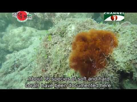 Nature and Life - Episode 121 (Corals)