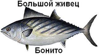 Російська Рибалка 3 Сейшели Великий живець!