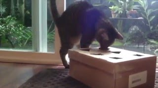 CAT INTELLIGENCE TEST:  Homemade Food Puzzle
