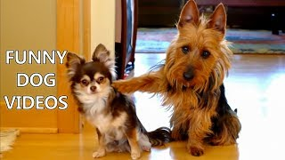 Download *Try Not To Laugh Challenge* Funny Dogs Compilation - Funniest Dog Videos 2017 Mp3 and Videos