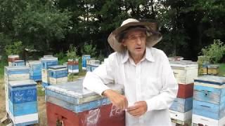 """""""SOS""""!!! После гибели пчел начали гибнуть домашние животные. Кто следующий?! 23.06. 2018 г."""