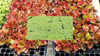 Pot Bibit / Fibroot / Pot Tray / Seedling / semai / pottray / pertanian / Tray Pot Semai TYPE 128