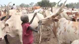 Les éleveurs Dinka face aux changements climatiques