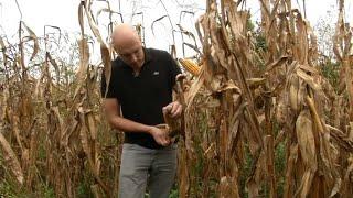 Cet agriculteur se passe du glyphosate. Et il gagne bien mieux sa vie