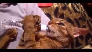 """Best Funny Cats Compilation Videos Подборка Смешные Кошки 2016"