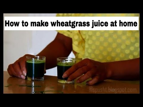how to grow wheatgrass at home youtube