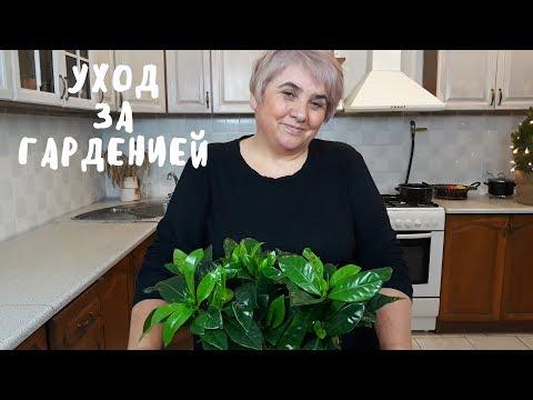 ГАРДЕНИЯ. Мои цветы. Мой опыт.