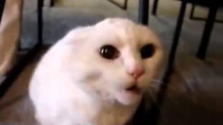 Приколы с животными кошку окончательно достал хозяин