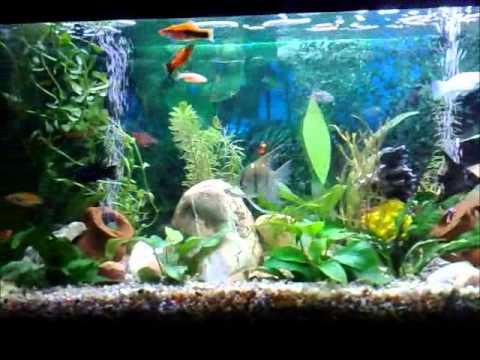 Il mio acquario tropicale d 39 acqua dolce youtube for Acqua acquario
