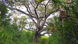 Devil's Tree, Florida - The Real Story Behind The Haunted Location
