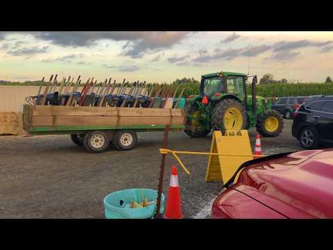 Corn Maze Kent WA
