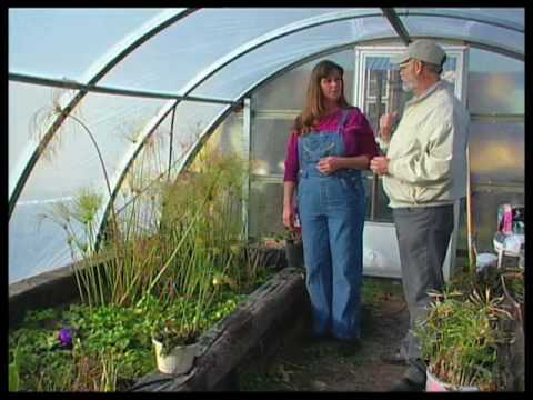 How To Grow Tropical Water Plants In A Greenhouse Youtube