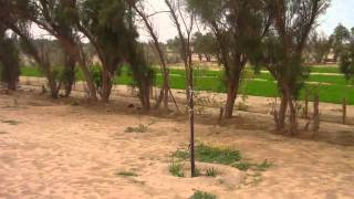 Abdaly Farm Kuwait