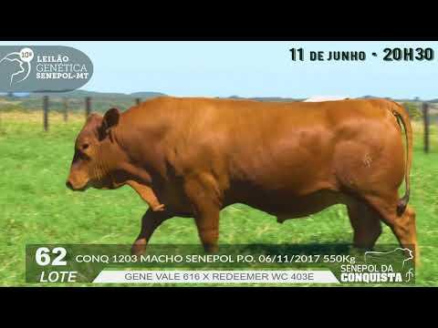 LOTE 62 CONQ 1203
