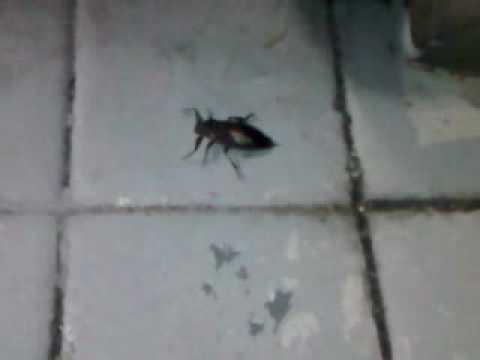 Florida Bugs