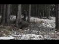 WILD Jaeger Czech Republic Drive Hunt (Drückjagd) 1