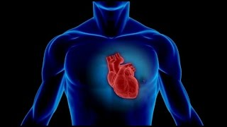 Fakta om hjertet du kanskje ikke visste...