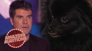 Ant And Dec Get HYPNOTISED By A Dog On Britain's Got Talent!   Amazing Auditions