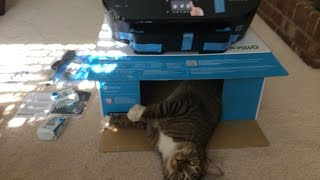 Box Opening and Install of a HP OfficeJet Printer Model 5740 With Sammy the Cat  - April 10, 2014