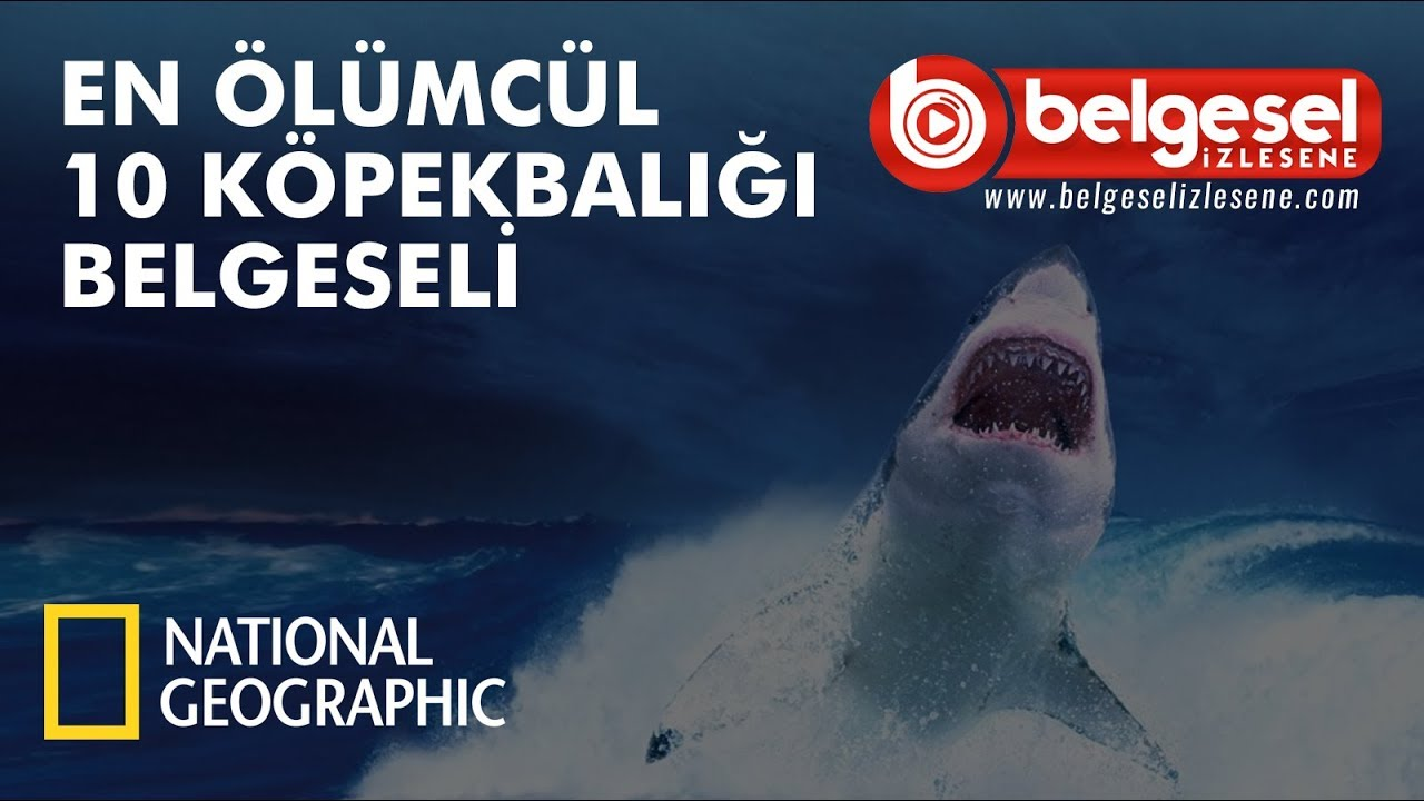 En Ölümcül 10 Köpek Balığı Belgeseli - Türkçe Dublaj