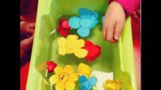 suda açan çiçek deneyi