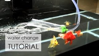 Water Change Tutorial | Goldfish Care