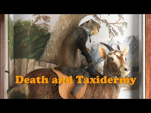 Death and Taxidermy