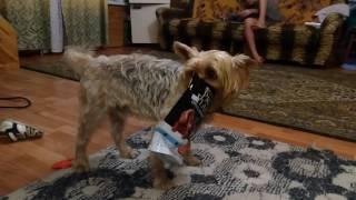 Смешная собака и пакет