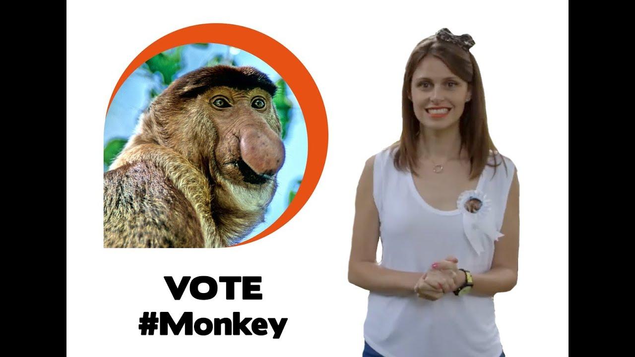 Ugly animal vote - Proboscis monkey (Ellie Taylor) - YouTube
