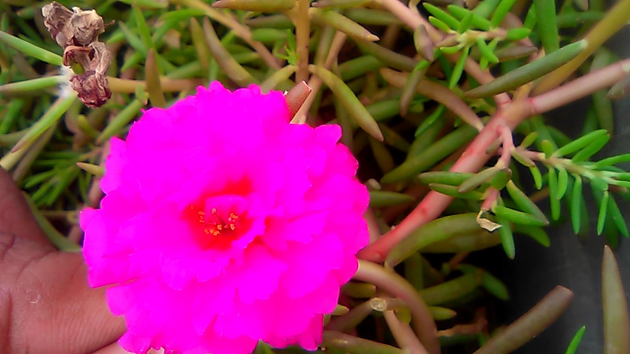 How To Make Best Pink Colour Flowers Plants
