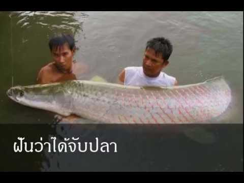 ฝันว่าได้จับปลา หมายถึงอะไร (เลขเด็ด)