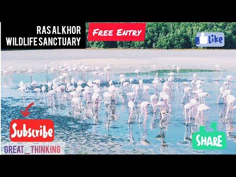 Ras Al Khor Birds sanctuary| Travel Vlog | Dubai | UAE #Dubai #UAE #WeekendTrip