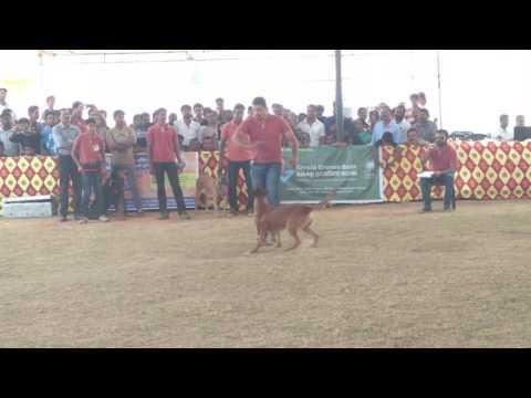 Dog show in kottayam by Sajan Saji  dog trainer