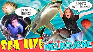 ¡¡Un DÍA entre TIBURONES!! 🦈 SEA LIFE Aquarium de MELBOURNE, Australia ⭐️