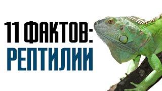 11 фактов о рептилиях и интересных особенностях пресмыкающихся