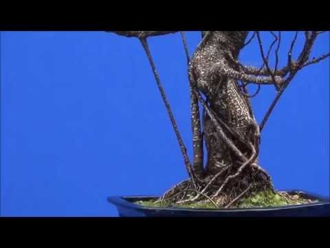 Bonsai trees photo shoot for a forest animation movie