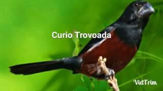 CURIO PRAIA CLASSICO REPETIDOR COM INTERVALOS DE 15 MINUTOS (Trovoada)
