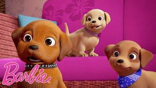 Barbie Polska 💖Wszystkie najsłodsze zwierzęta 🐱💖Kompilacja filmów Barbie