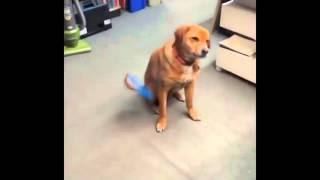 Приколы с собаками  Собаки неудачники