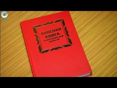 В Новосибирской области готовятся к переизданию Красной книги