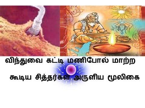 விந்துவை கட்டி மணிபோல்  மாற்றக்கூடிய சித்தர்கள் அருளிய மூலிகை - Herbal Medicine In Tamil