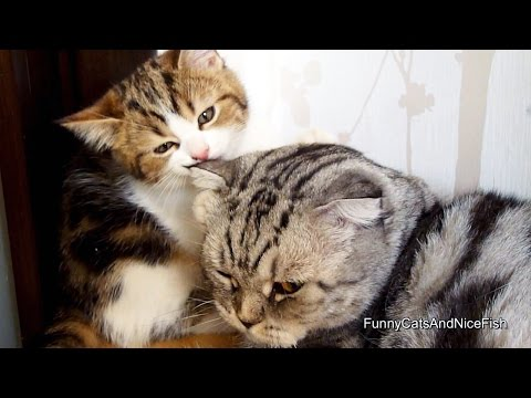 Cute Kitten and Cat gives love to each other and falls asleep