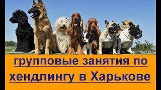 групповые занятия по дрессировки и хендлингу Харькове Дрессировка собак в группе Харьков