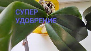 Удобрение и полив орхидей в домашних условиях.