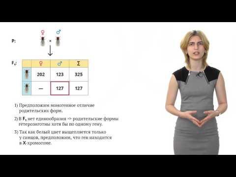 Генетика пола. Решение генетических задач - 9