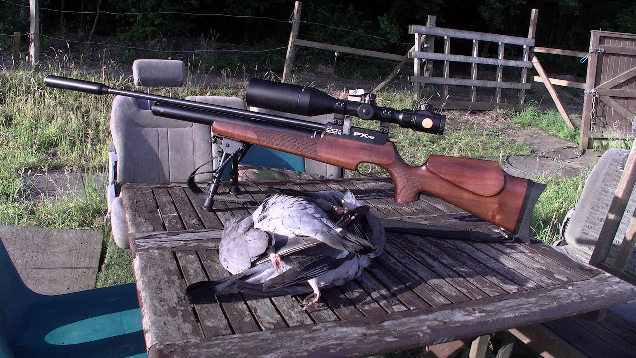 Airgun hunting wood pigeons 10/07/15